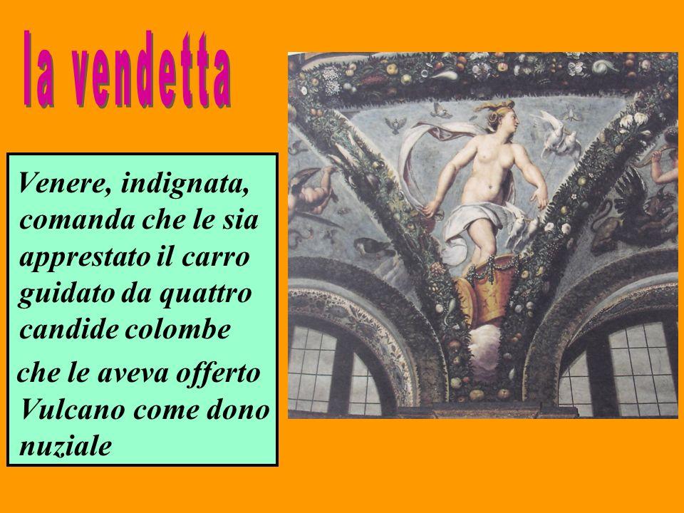 la vendetta Venere, indignata, comanda che le sia apprestato il carro guidato da quattro candide colombe.