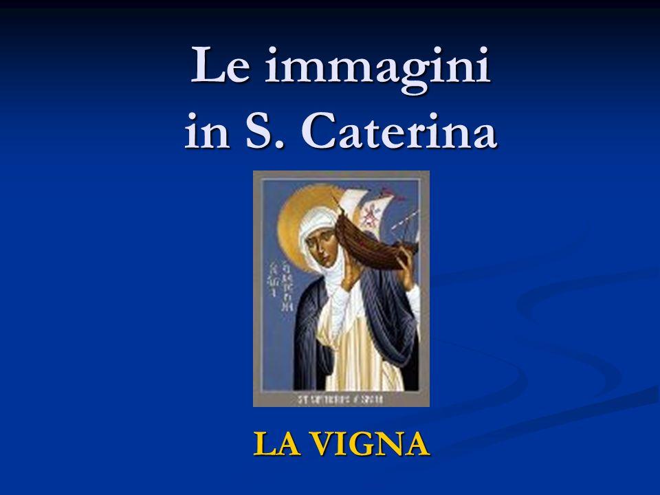 Le immagini in S. Caterina