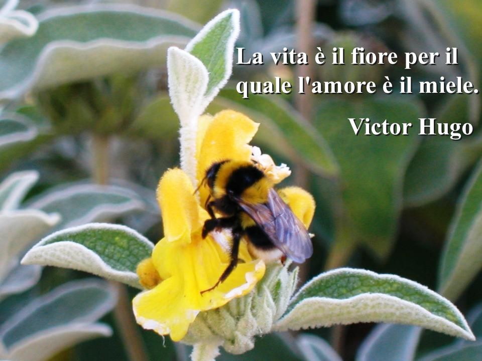 La vita è il fiore per il quale l amore è il miele.