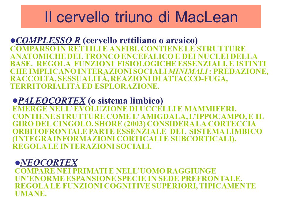 Il cervello triuno di MacLean