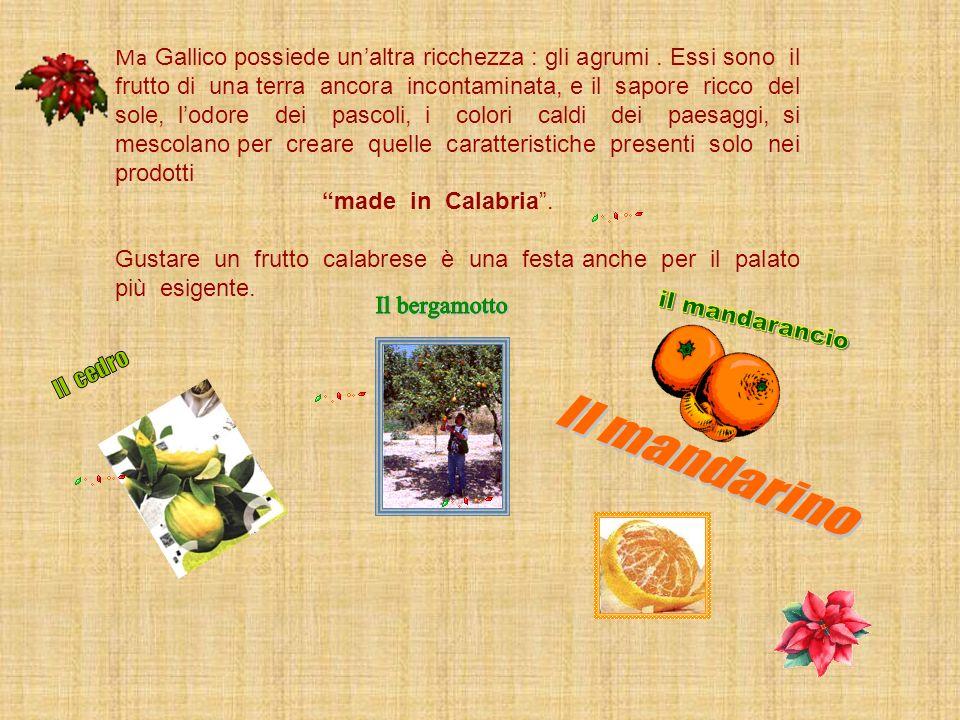 Ma Gallico possiede un'altra ricchezza : gli agrumi