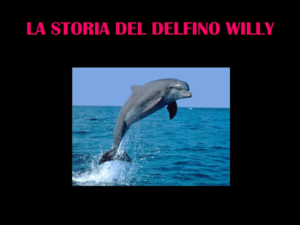 LA STORIA DEL DELFINO WILLY