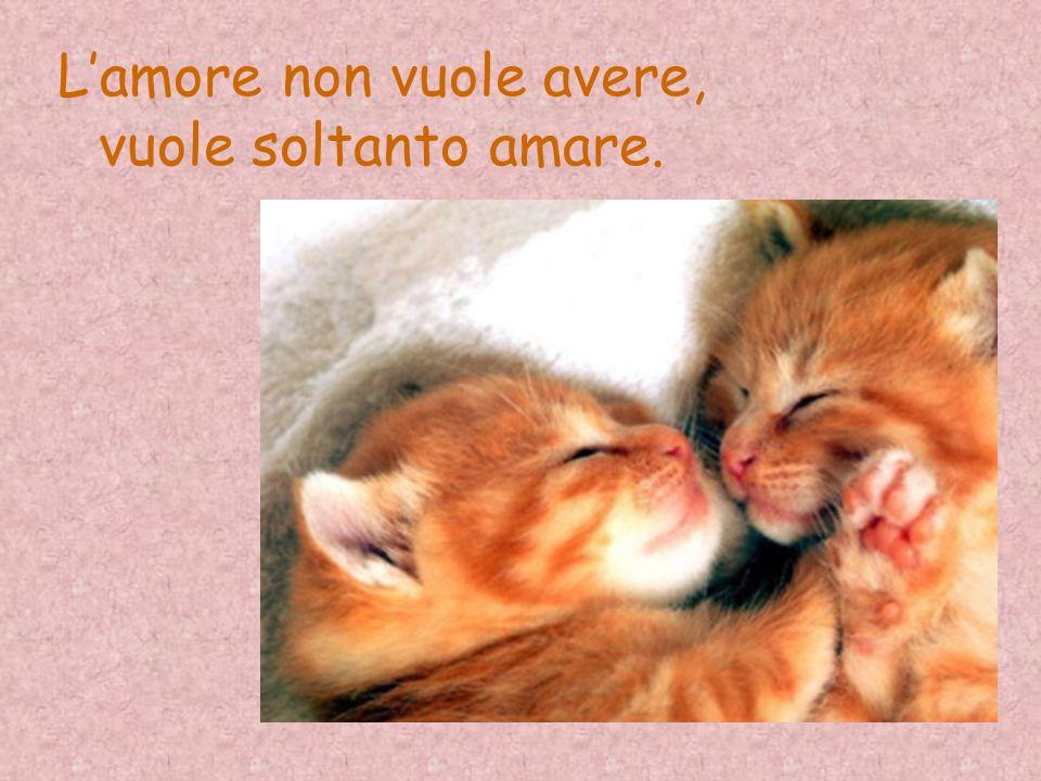 L'amore non vuole avere, vuole soltanto amare.