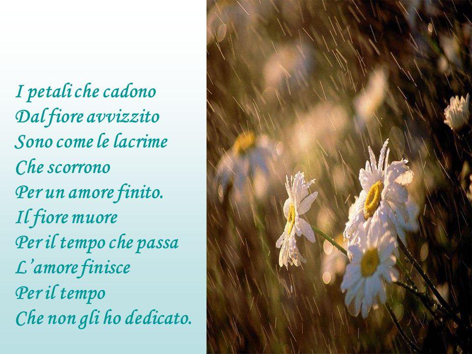 I petali che cadono Dal fiore avvizzito. Sono come le lacrime. Che scorrono. Per un amore finito.