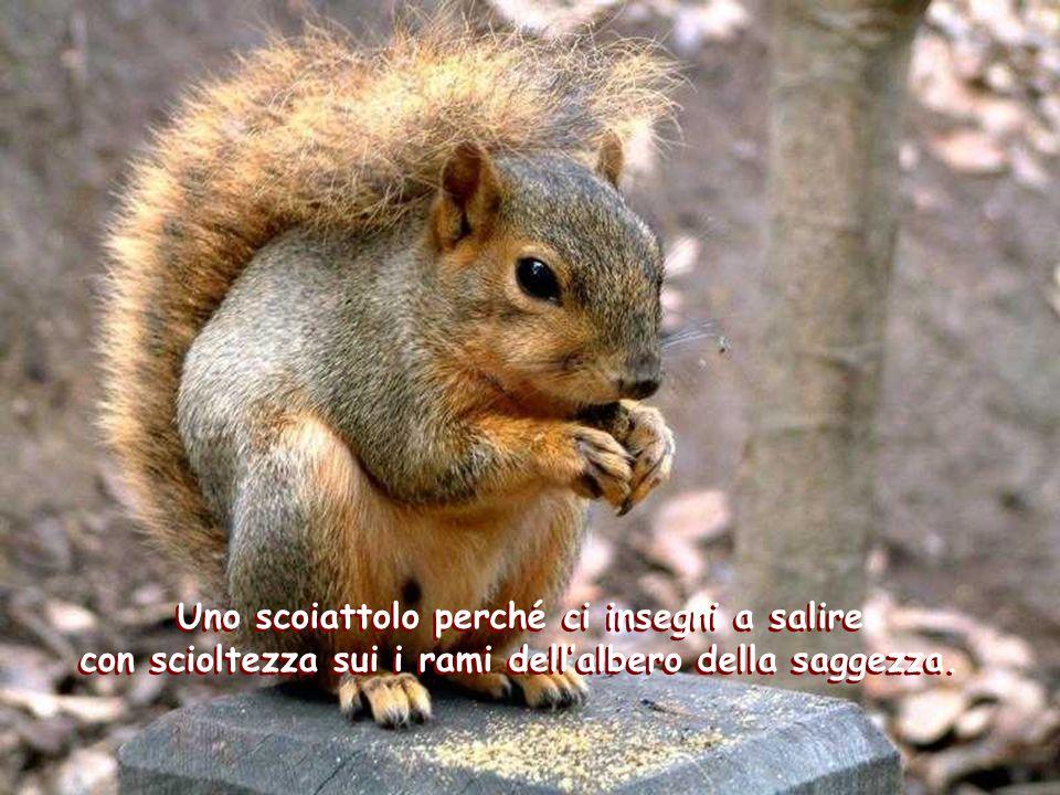 Uno scoiattolo perché ci insegni a salire con scioltezza sui i rami dell'albero della saggezza.