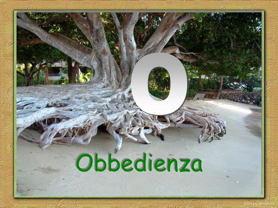 O Obbedienza