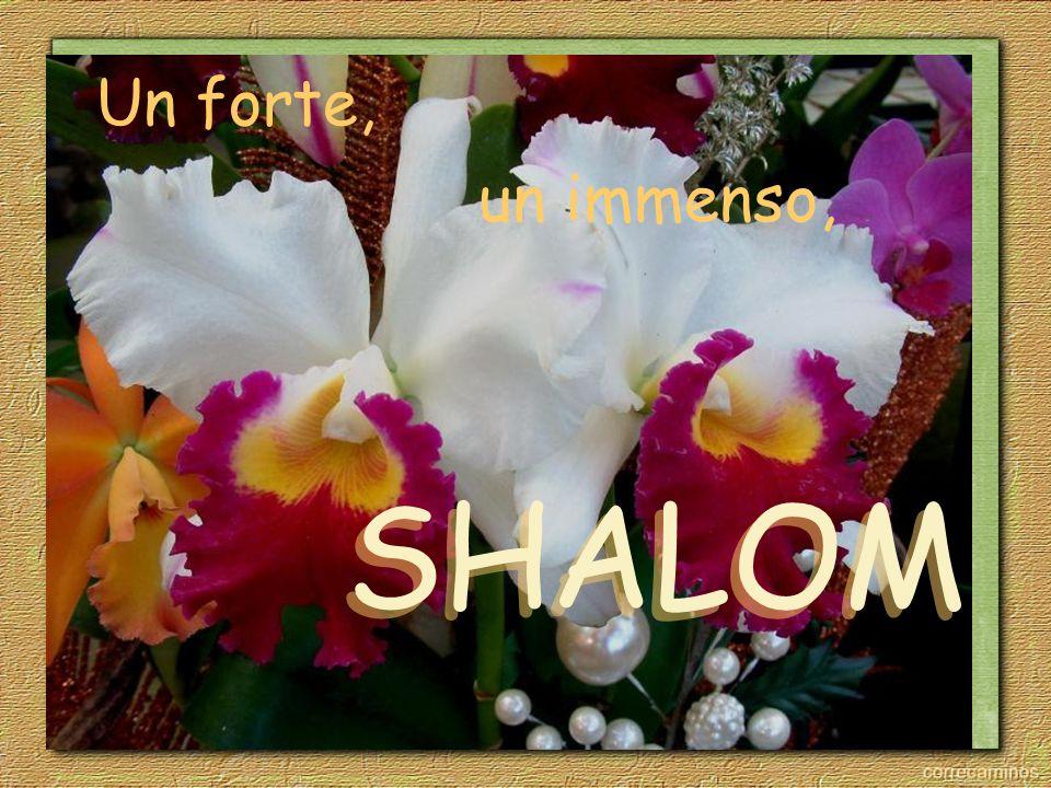 Un forte, un immenso, SHALOM