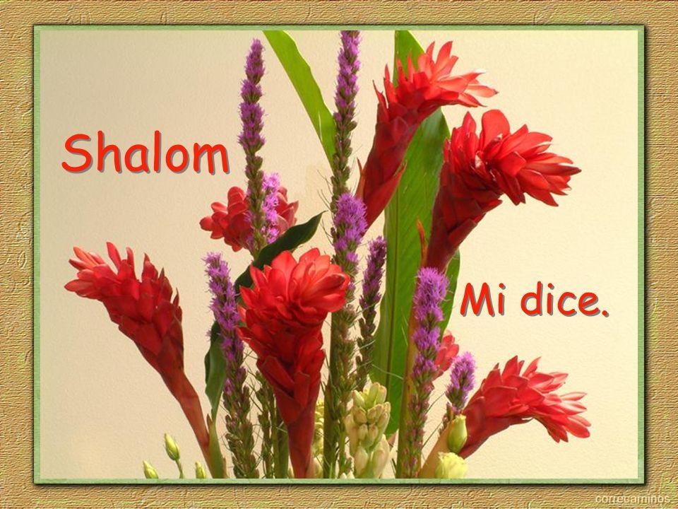 Shalom Mi dice.