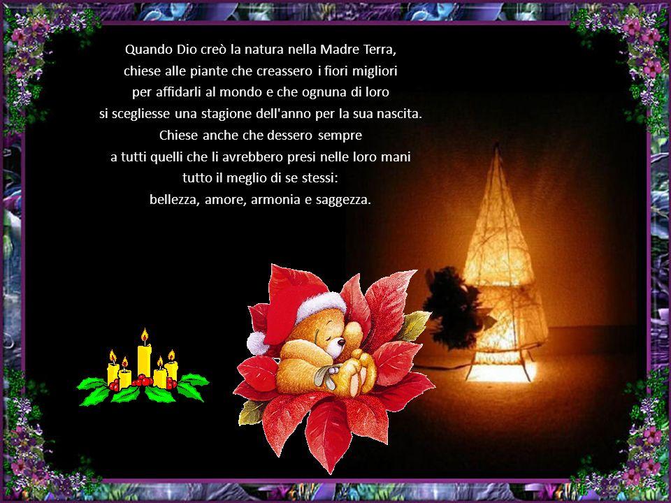 Quando Dio creò la natura nella Madre Terra, chiese alle piante che creassero i fiori migliori per affidarli al mondo e che ognuna di loro si scegliesse una stagione dell anno per la sua nascita.