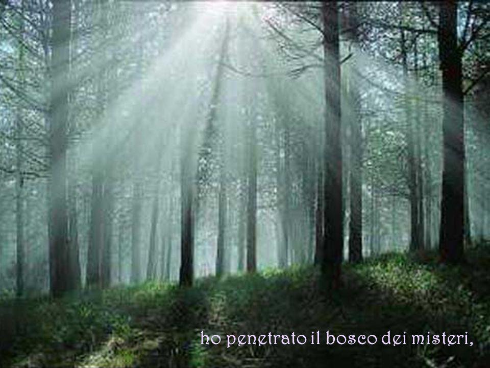 ho penetrato il bosco dei misteri,