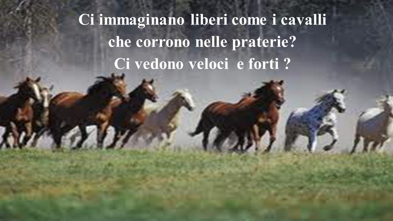 Ci immaginano liberi come i cavalli che corrono nelle praterie
