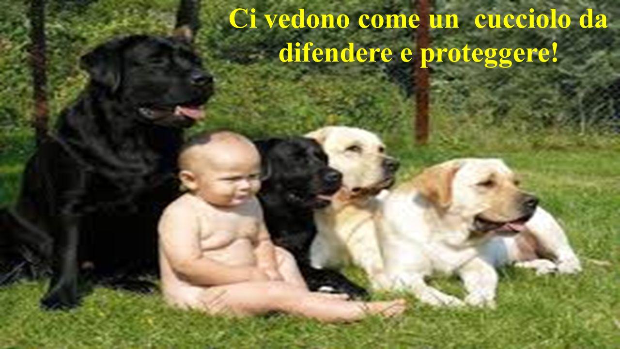 Ci vedono come un cucciolo da difendere e proteggere!