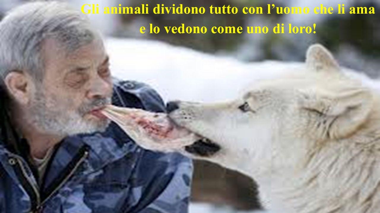 Gli animali dividono tutto con l'uomo che li ama