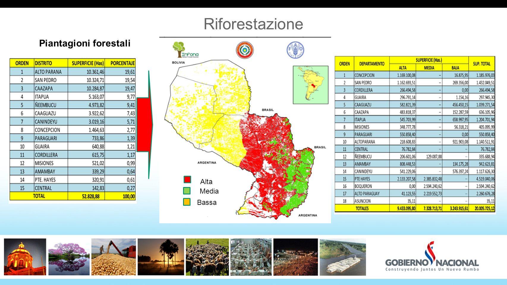 3434 Riforestazione Piantagioni forestali Alta Media Bassa 34
