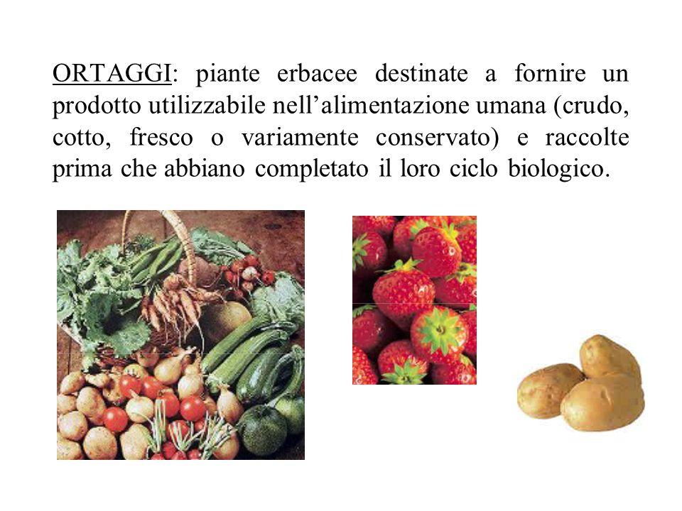 ORTAGGI: piante erbacee destinate a fornire un prodotto utilizzabile nell'alimentazione umana (crudo, cotto, fresco o variamente conservato) e raccolte prima che abbiano completato il loro ciclo biologico.