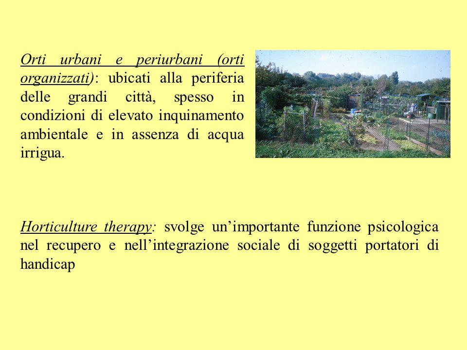 Orti urbani e periurbani (orti organizzati): ubicati alla periferia delle grandi città, spesso in condizioni di elevato inquinamento ambientale e in assenza di acqua irrigua.