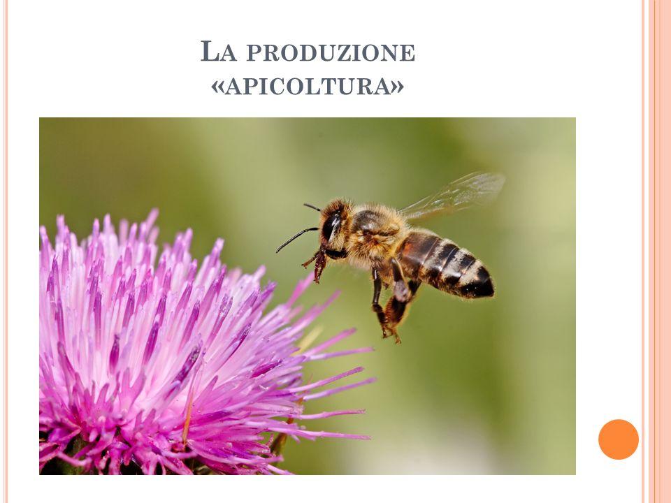 La produzione «apicoltura»