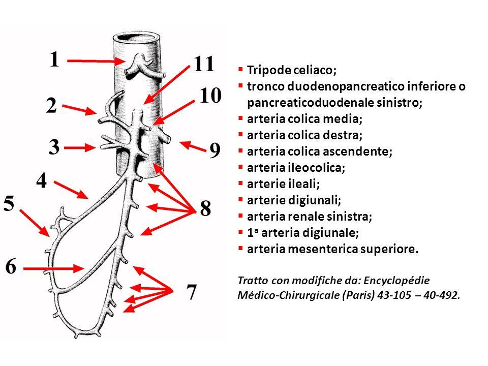 tronco duodenopancreatico inferiore o pancreaticoduodenale sinistro;