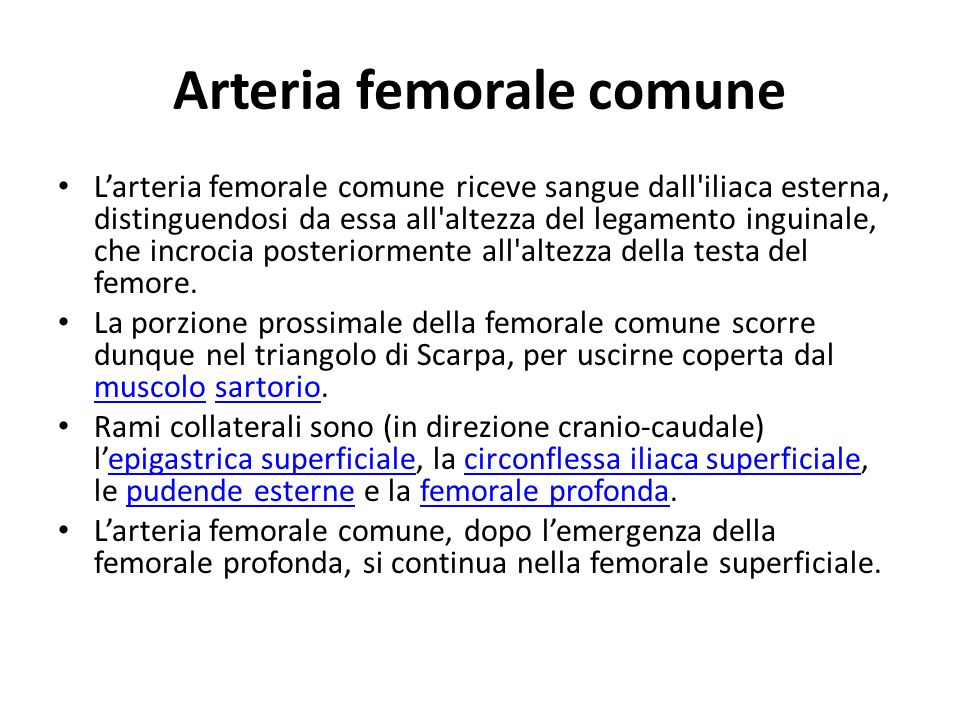 Arteria femorale comune
