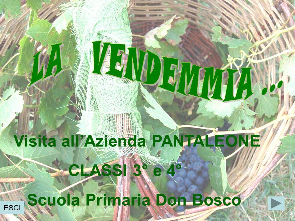 Visita all'Azienda PANTALEONE CLASSI 3° e 4° Scuola Primaria Don Bosco