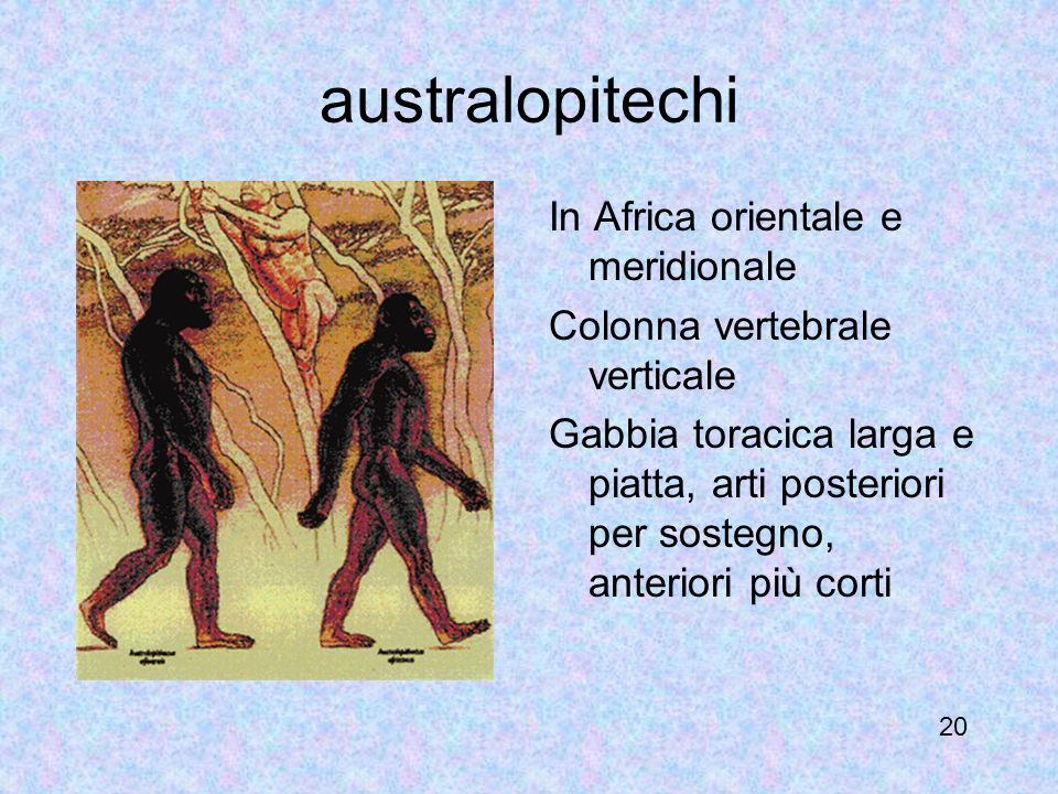 australopitechi In Africa orientale e meridionale