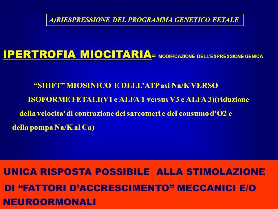 IPERTROFIA MIOCITARIA= MODIFICAZIONE DELL'ESPRESSIONE GENICA