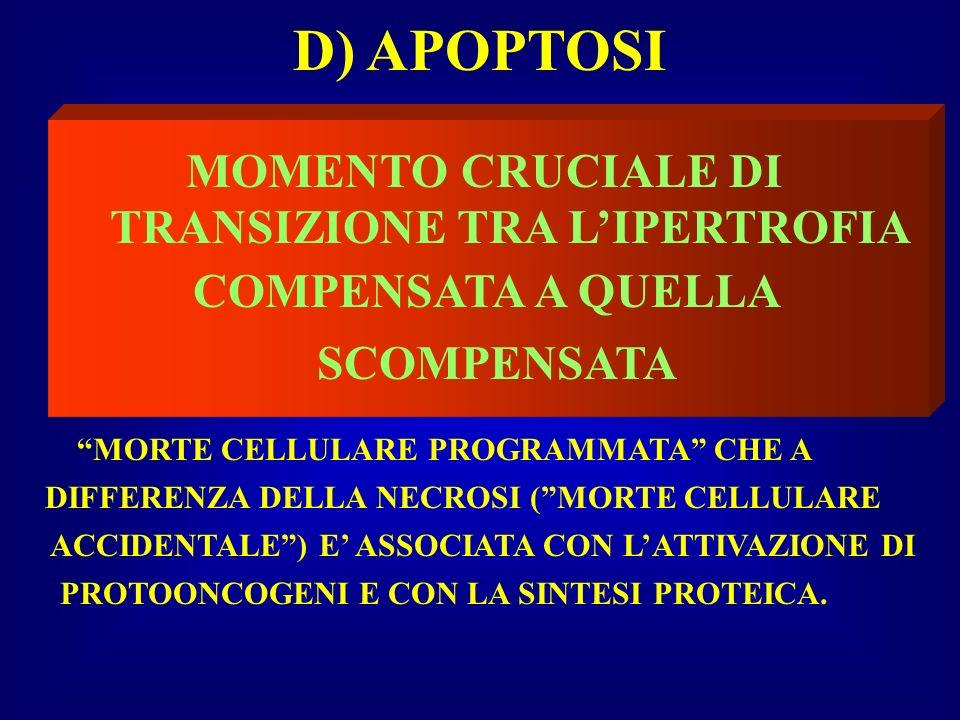 D) APOPTOSI MOMENTO CRUCIALE DI TRANSIZIONE TRA L'IPERTROFIA