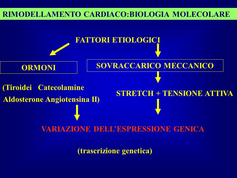 RIMODELLAMENTO CARDIACO:BIOLOGIA MOLECOLARE