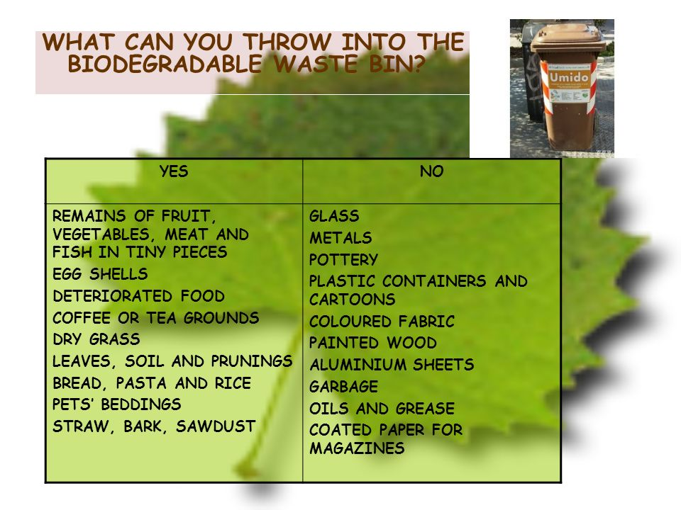 WHAT CAN YOU THROW INTO THE BIODEGRADABLE WASTE BIN