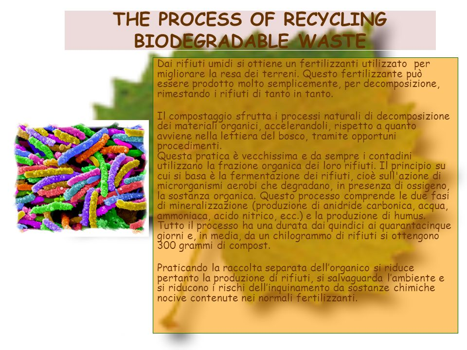 THE PROCESS OF RECYCLING BIODEGRADABLE WASTE