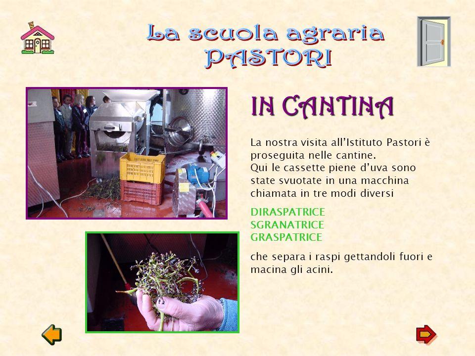 La scuola agraria PASTORI IN CANTINA