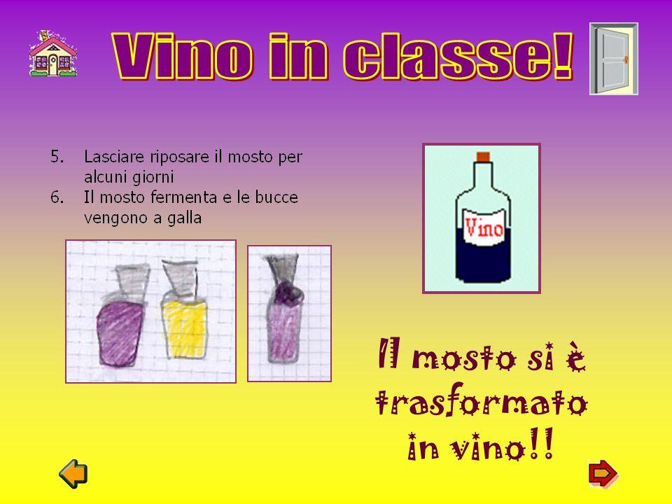 Il mosto si è trasformato in vino!!
