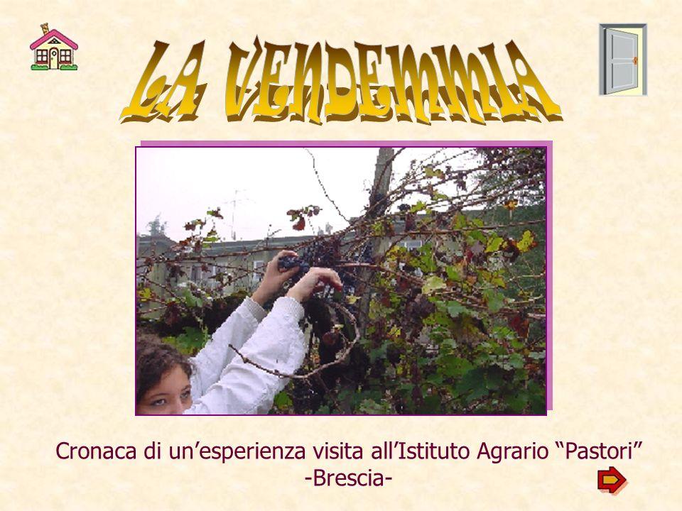 LA VENDEMMIA Cronaca di un'esperienza visita all'Istituto Agrario Pastori -Brescia-