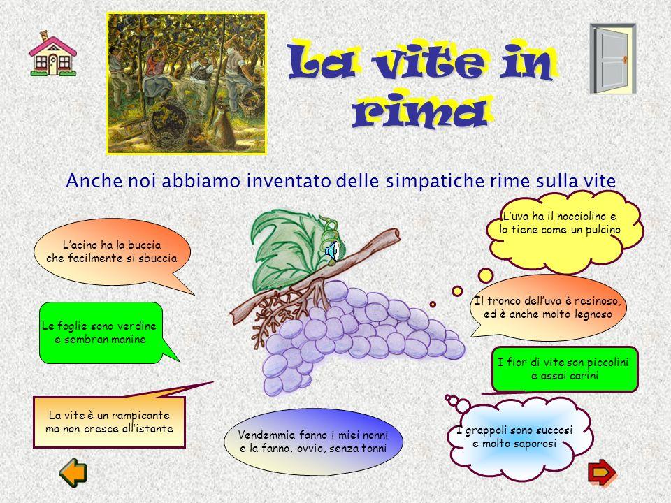 La vite in rima Anche noi abbiamo inventato delle simpatiche rime sulla vite. L'uva ha il nocciolino e lo tiene come un pulcino.