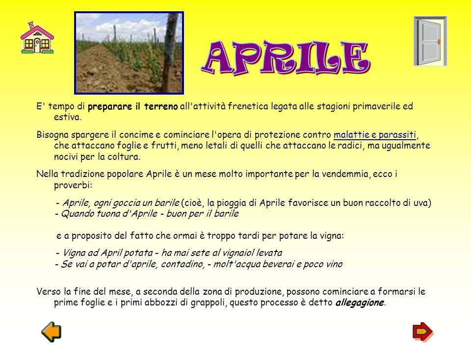 APRILE E tempo di preparare il terreno all attività frenetica legata alle stagioni primaverile ed estiva.