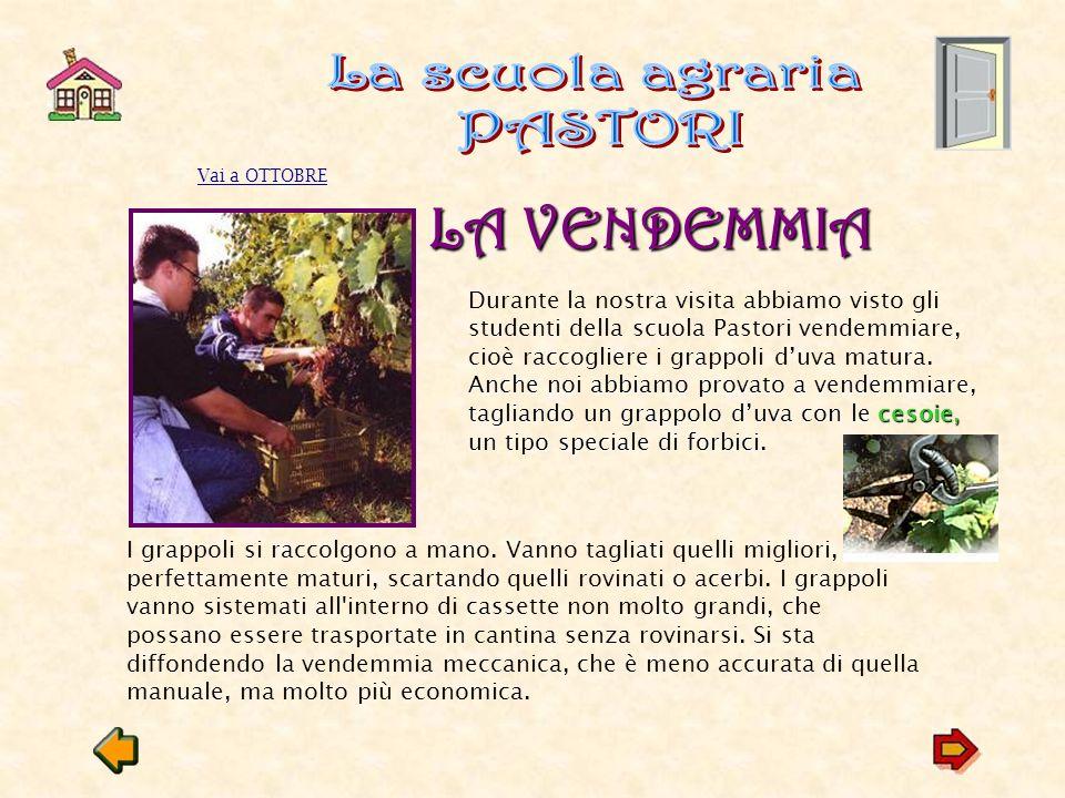 Estremamente L'uva e l'arte e il vino Quadri e artisti la scienza - ppt  PI49