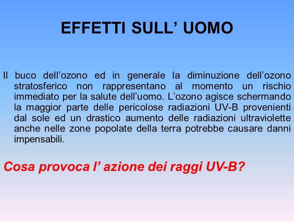 EFFETTI SULL' UOMO Cosa provoca l' azione dei raggi UV-B