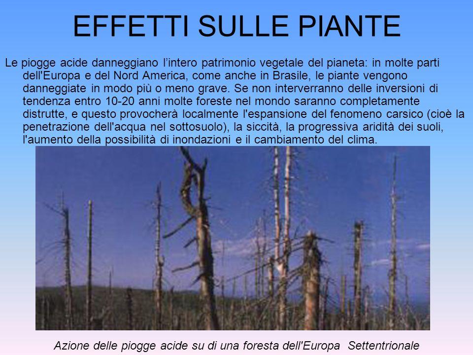 Azione delle piogge acide su di una foresta dell Europa Settentrionale