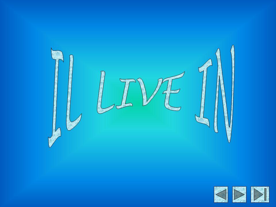 IL LIVE IN