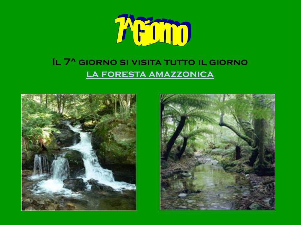 Il 7^ giorno si visita tutto il giorno la foresta amazzonica
