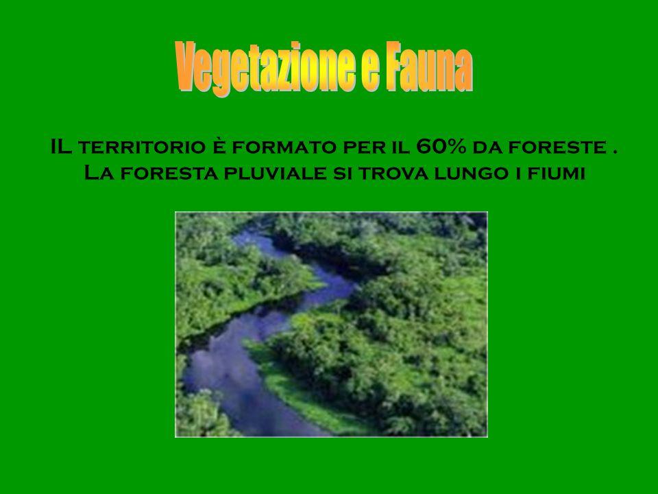 Vegetazione e Fauna IL territorio è formato per il 60% da foreste .