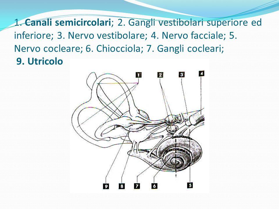 1. Canali semicircolari; 2