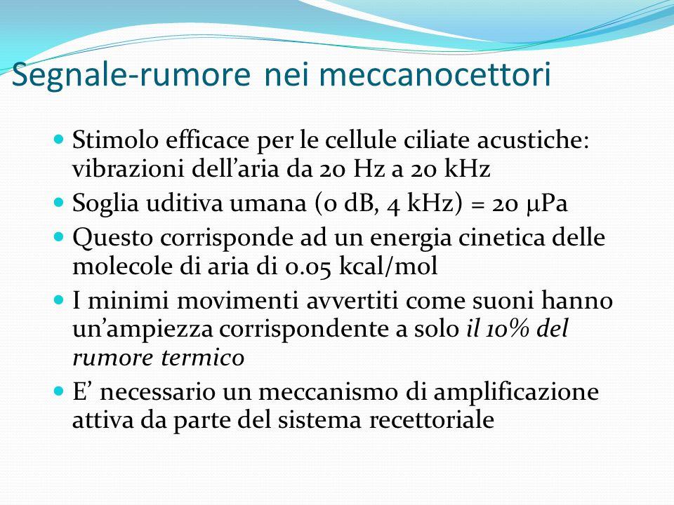 Segnale-rumore nei meccanocettori