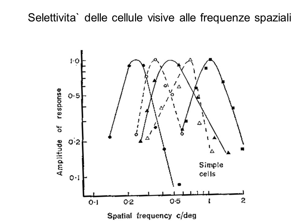 Selettivita` delle cellule visive alle frequenze spaziali