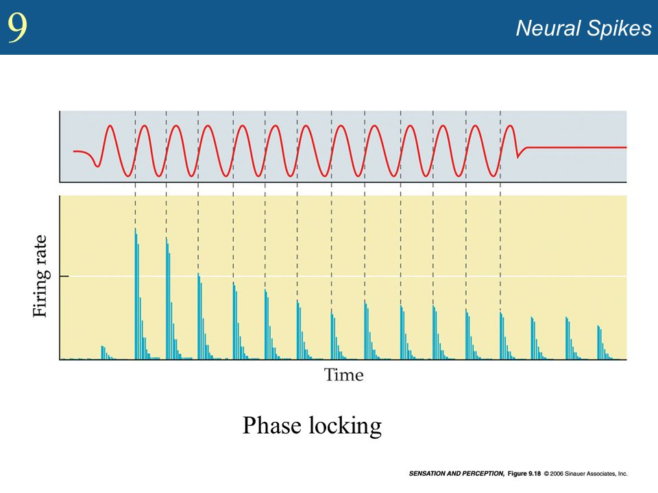 Phase locking Neural Spikes