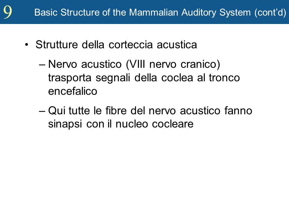 Basic Structure of the Mammalian Auditory System (cont'd)