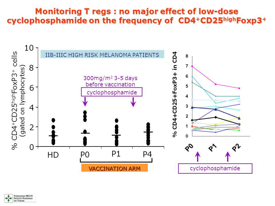 Monitoring T regs : no major effect of low-dose cyclophosphamide on the frequency of CD4+CD25highFoxp3+