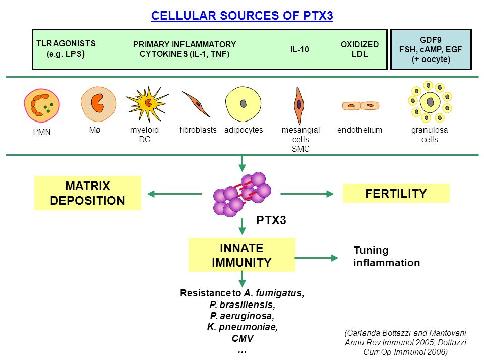 CELLULAR SOURCES OF PTX3 MATRIX DEPOSITION FERTILITY INNATE IMMUNITY