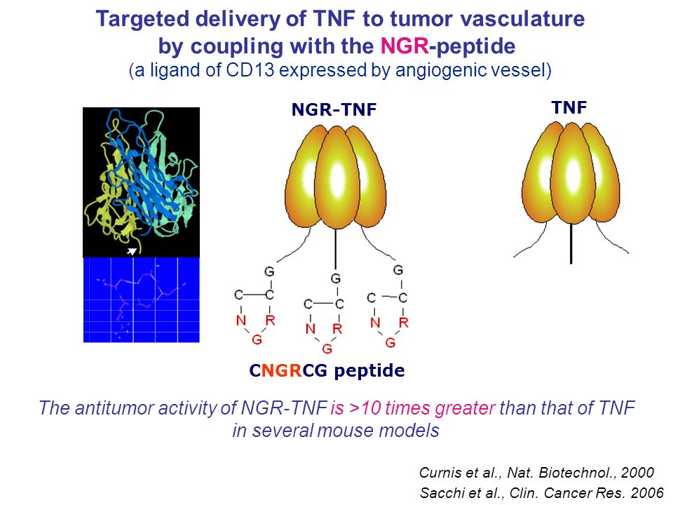 Targeted delivery of TNF to tumor vasculature