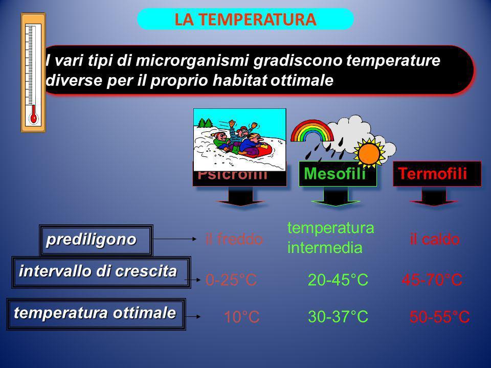 LA TEMPERATURA I vari tipi di microrganismi gradiscono temperature diverse per il proprio habitat ottimale.
